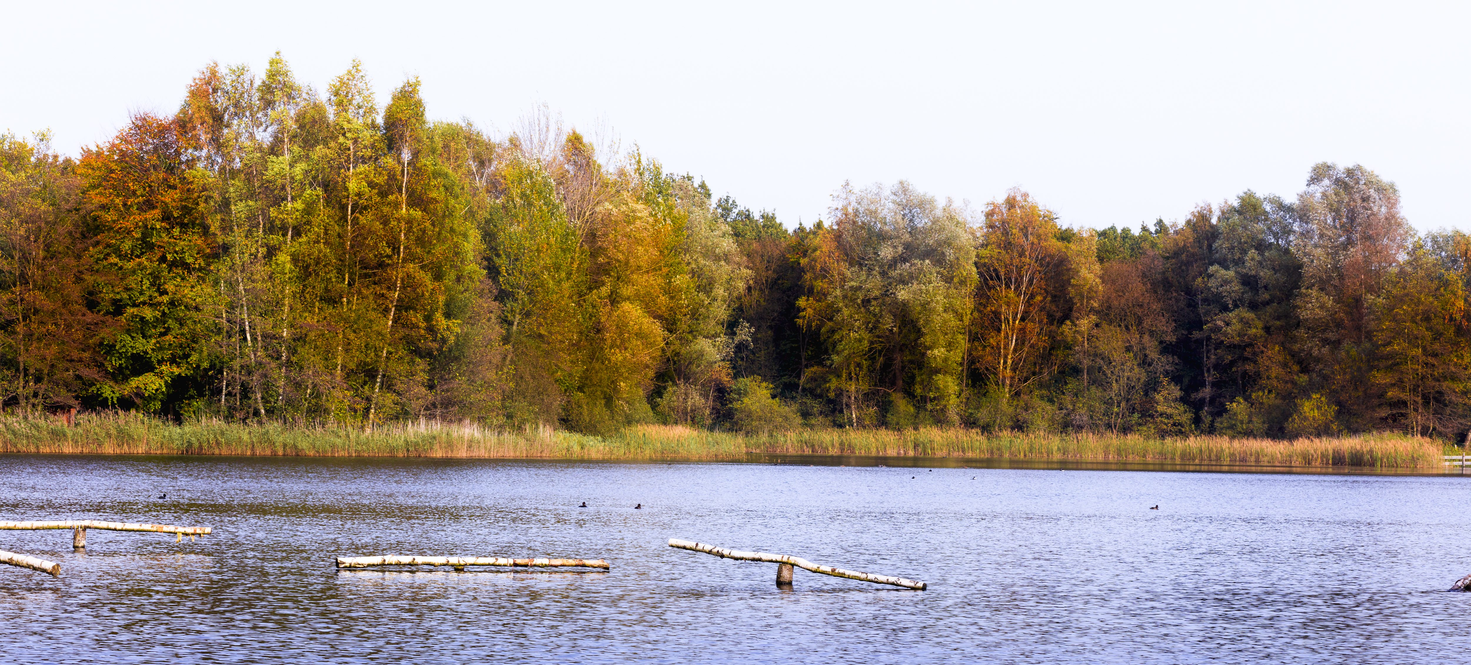 Kuinderbos; klein Zweden van de polder