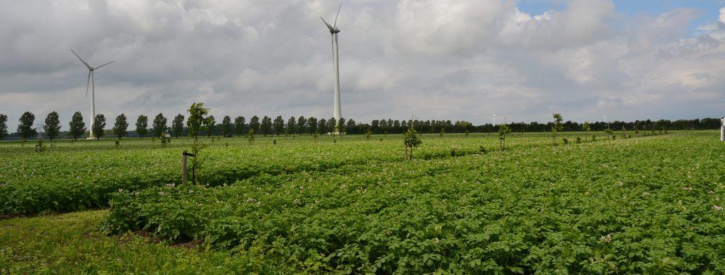 Overzichtsfoto van proefveld met aardappelplanten