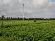 Bouwen aan kennis over agroforestry