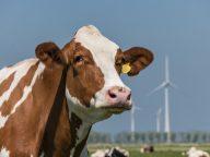 'Goed boeren kunnen boeren niet alleen'